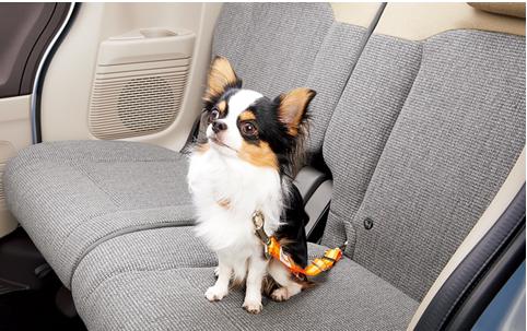 フリード【プラス】ドッグ!愛犬も喜ぶ室内でおすすめのアクセサリーは?